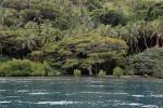 urozmaicony drzewostan Viani Bay