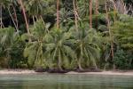 palmy też muszą być