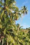 palmowisko