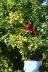 dzieciaki zrywają dla nas owoce