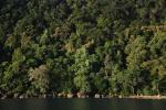 bujna zieleń Matagi