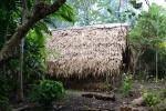 domostwa w dżunglii