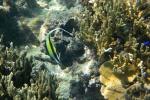 kolega Nemo na Fidżi
