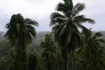 56 bujna roślinność Taveuni