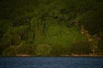 znowu bujna zieleń Vanua Levu