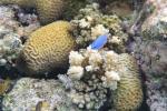 niebieska rybka złapana przez Natalkę