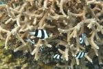 pasiaki zfotografowane przez Natalkę