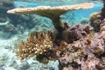 wachlarz z Astrolabe Reef