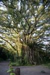 awatarowe drzewo, jak nazwały je dziewczynki