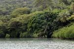 bujna roślinność w zatoce