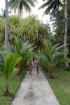 na ścieżce w hoteliku Tavanipupu