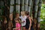 próba objęcia bambusa