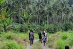 palmowa sceneria