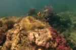 podwodny krajobraz Lamen Bay