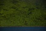 bujna zieleń wyspy