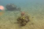 żółw w wodach Epi
