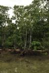 namorzyny w lagunie