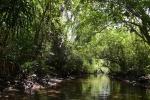 kanałem przez dżunglę