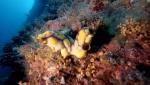 żachwa elementem podwodnego krajobrazu