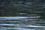 mieszkaniec Zatoki Kenelo 08.09.2014