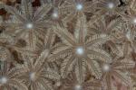Morovo North HL, korale jak kwiaty na łące