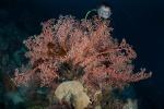 Gizo East MK, Zbyszek ukryty za koralem