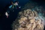 Gizo North MK, Kuba przy polu miękkich korali