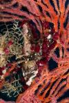 Vonavona PK, kompozycja z żachw, korali i hydrozoa