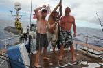 tuńczyk złapany po wypłynięciu z Wysp Salomona 16.09.2014