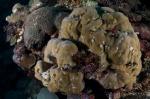 Rendova MK, formacja korali z drzewkami bożonarodzeniowymi