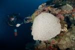 Rendova MK, koral ze Zbyszkiem