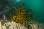 Morovo South PK, koral nazywany przez nas Shrekiem