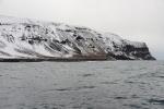 pingwinowisko na Wyspie Franklina