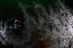 Mariusz spoziera zza czarnego korala