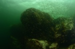 krajobraj podwodny Dusky Sound