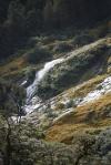 zieleń, mchy, woda - typowy widok w fiordlandzie