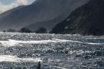 zachodnie wybrzeże fiordlandu