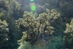 porośnięte porostami drzewa wzdłuż Irene River