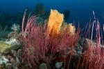 koralowa kompozycja 1 PK