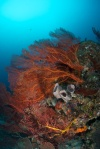koralowa kompozycja 2 PK