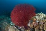 koralowa kompozycja 3 PK