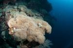 wielka koralowa poducha MK