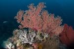 drzewa z miękkiego korala MK
