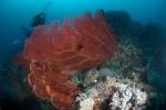 koralowcowe drzewo i nurkowie MK