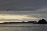 spokojna Bay of Island