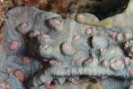 koralowiec jak pień starego drzewa z baśni HL