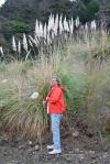 gigantyczne trawy