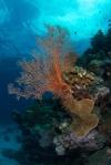 podwodne krajobrazy PK