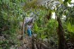 Olka w ogrodach wodza na Panasia Island