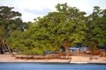 pirogowa przystań pod drzewem ZS